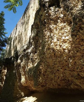 Falaise d'huîtres Sainte Croix du Mont