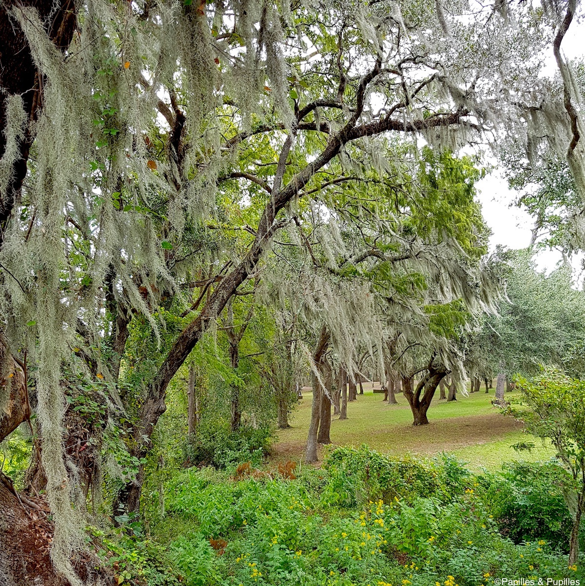 Brookgreen Gardens