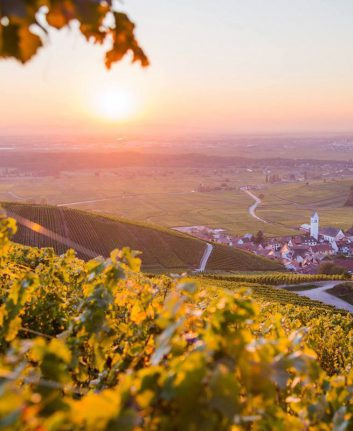 Vendanges Alsace ©Vins d'Alsace