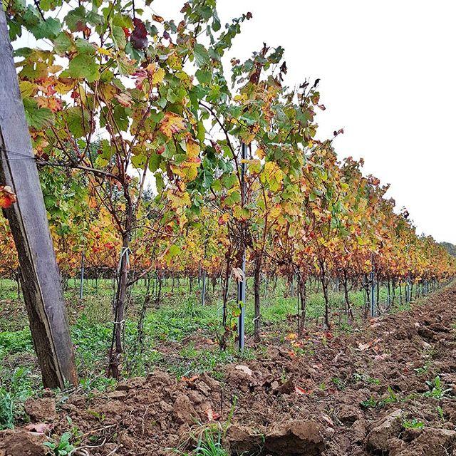 Jours après jours. .. les vignes .. Novembre
