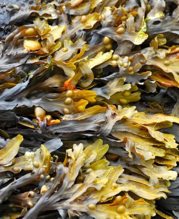 Algues (c) Ronile CC0 Pixabay