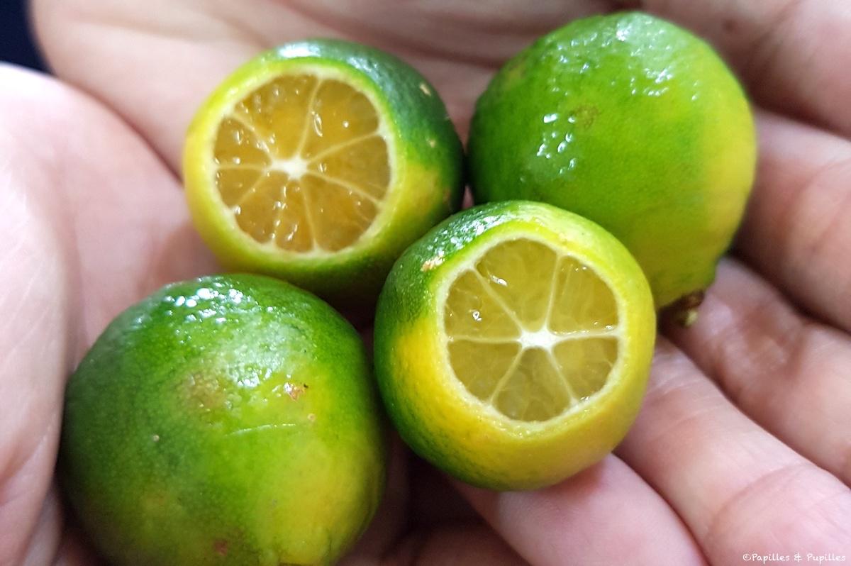 Hainan golden mandarine
