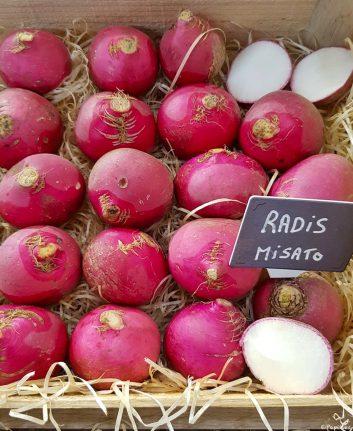 Radis Misato Red