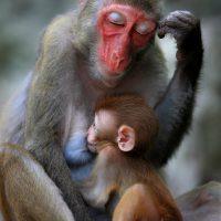 Singe et bébé