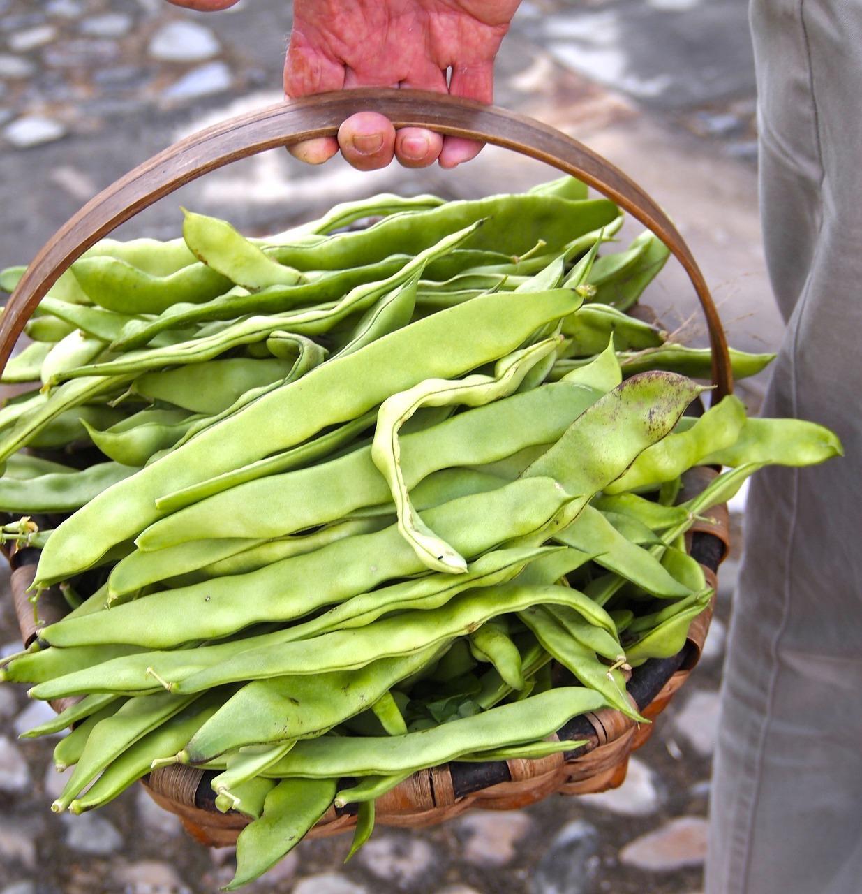 Recette haricot plat bon apptit with recette haricot plat haricots plats la tomate et au lard - Comment cuisiner les haricots verts ...