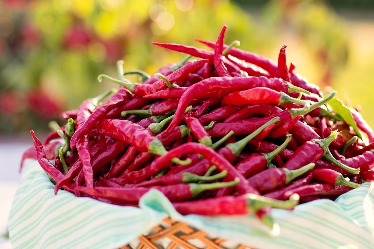 Recettes de piment de cayenne id es de recettes base de piment de cayenne - Piment de cayenne culture ...