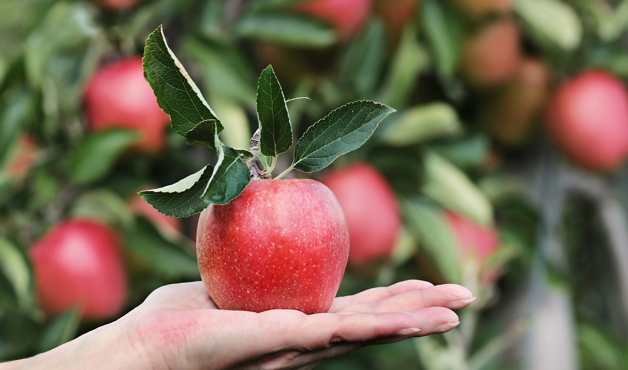 Pommes (c) Pixel2013 CC0 pixabay