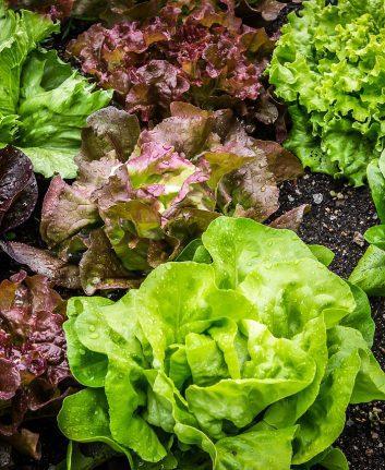 Salades (c) Maxmann CC0 pixabay