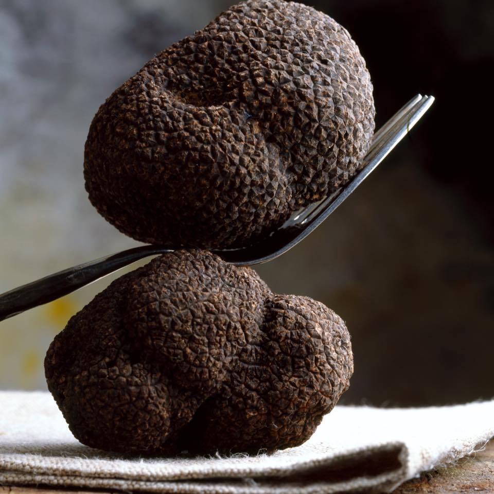 Truffes noires © Urbani