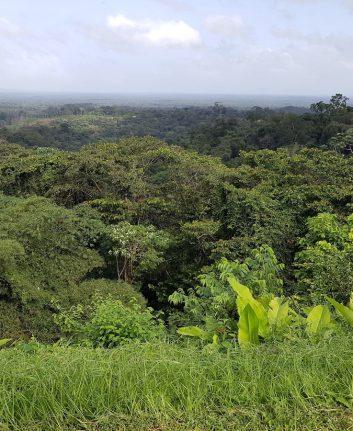 Guyane - Forêt primaire