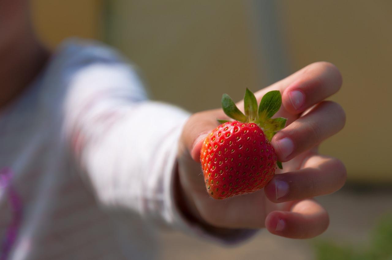 Fraises dans la main d'un enfant (c) Caropat Pixabay