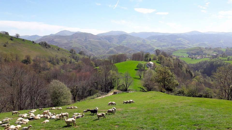 Vue sur la vallée depuis la ferme ©Feranyo