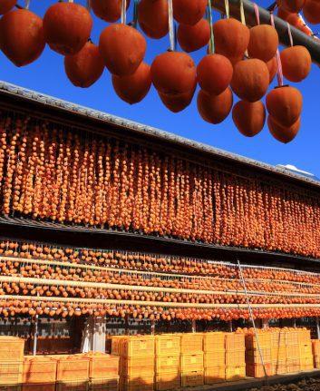Séchage des kakis © Saethapoeng TRIECHORB. shutterstock
