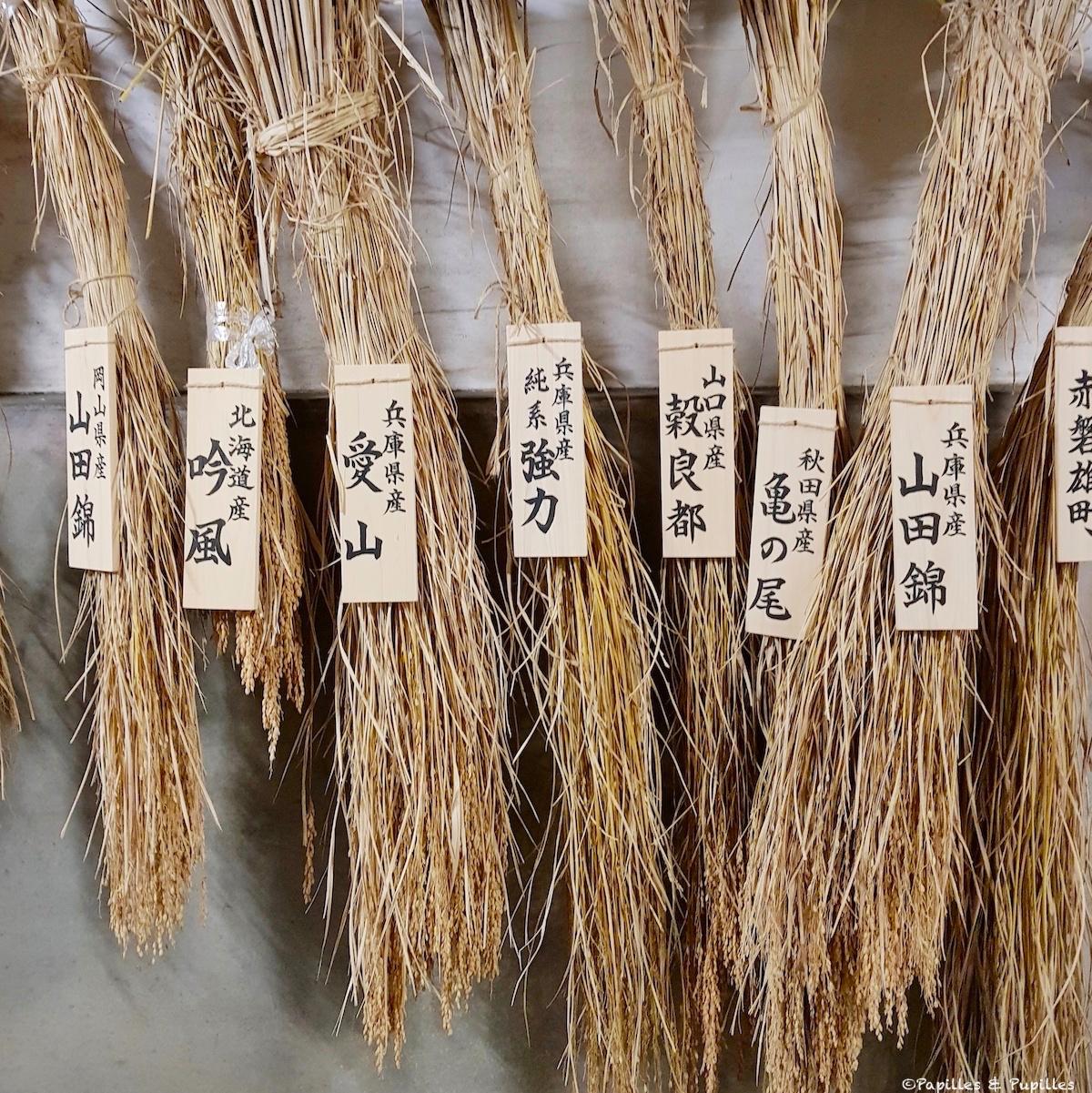 Différentes variétés de riz pour saké