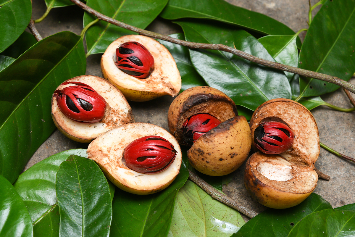 Noix de muscade dans sa coque avec macis ©Santhosh Varghese shutterstock