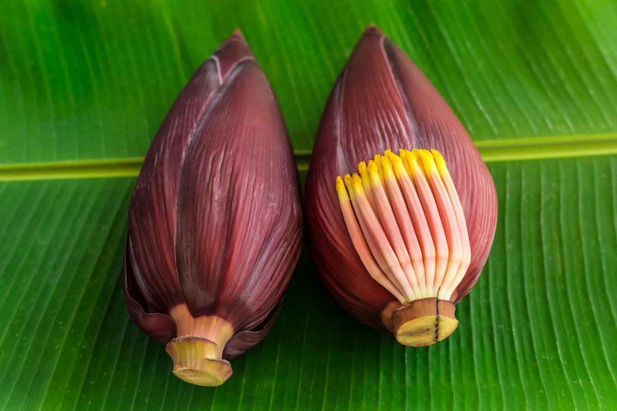 Ensalada de flor de plátano (Vietnam)