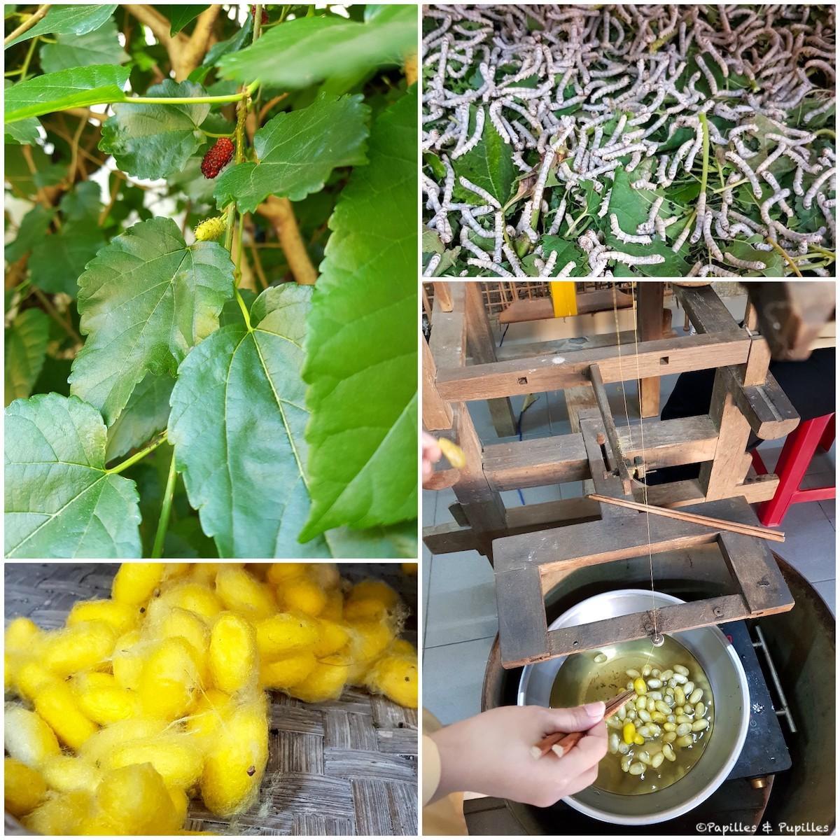 Murier, vers à soie, cocons