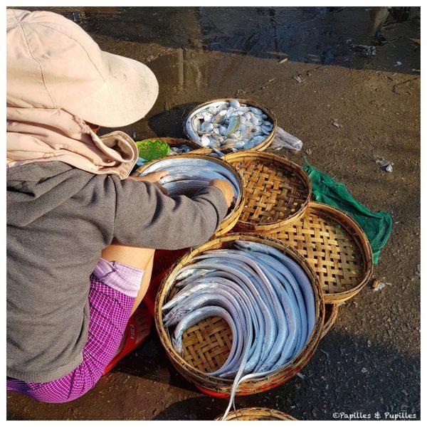 Poissons - Vietnam