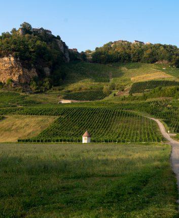 Vignoble Jura ©midgardson shutterstock
