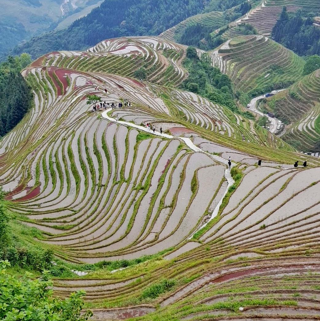 Les magnifiques rizières en terrasses