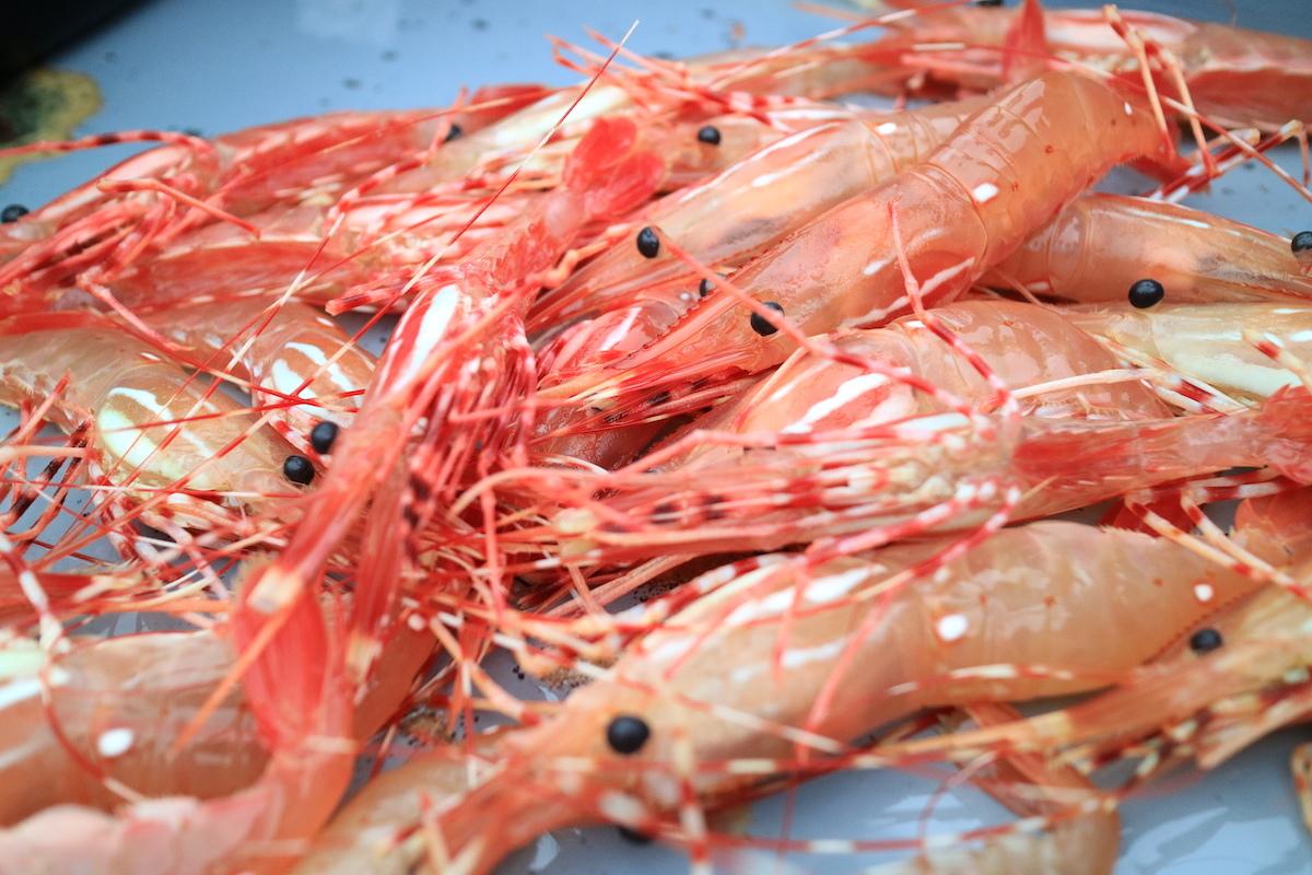 Spot Prawns - Crevettes à pois -© Kit Leong shutterstock