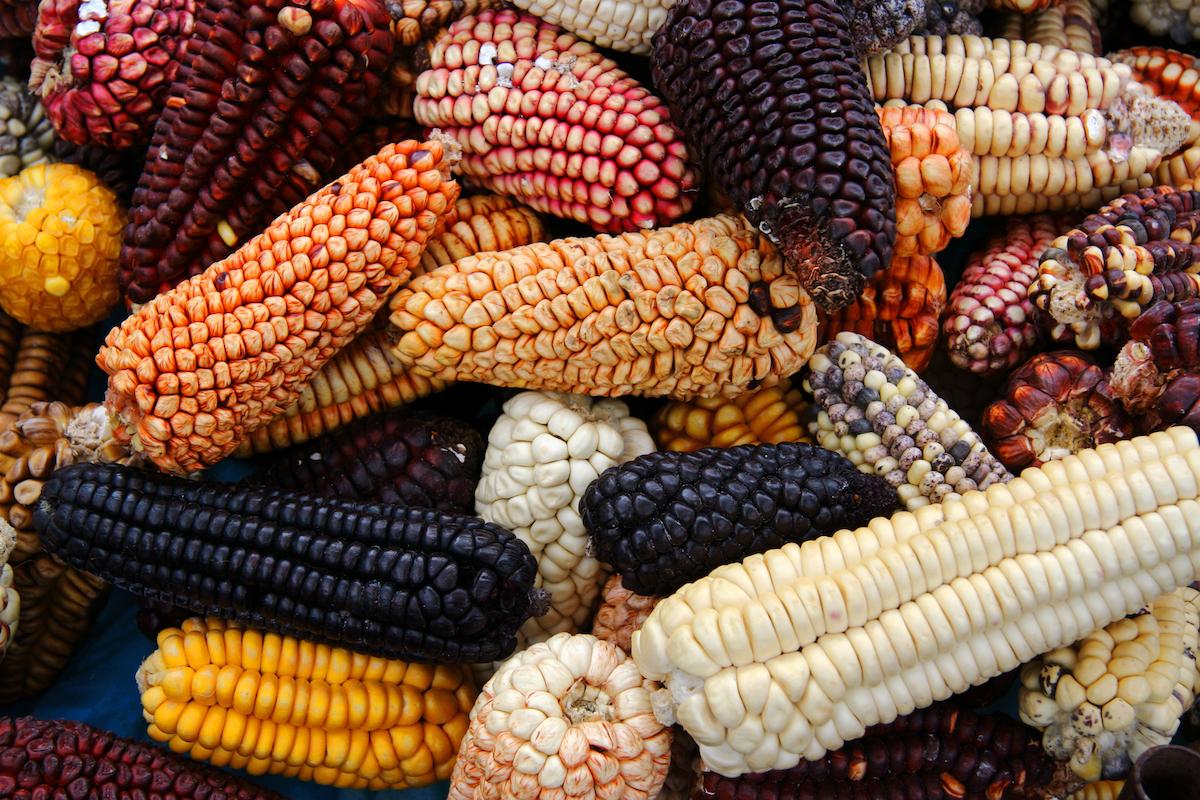 Pérou maïs ©De Akarawut shutterstock
