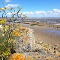 Estuaire de la Gironde - Marée basse