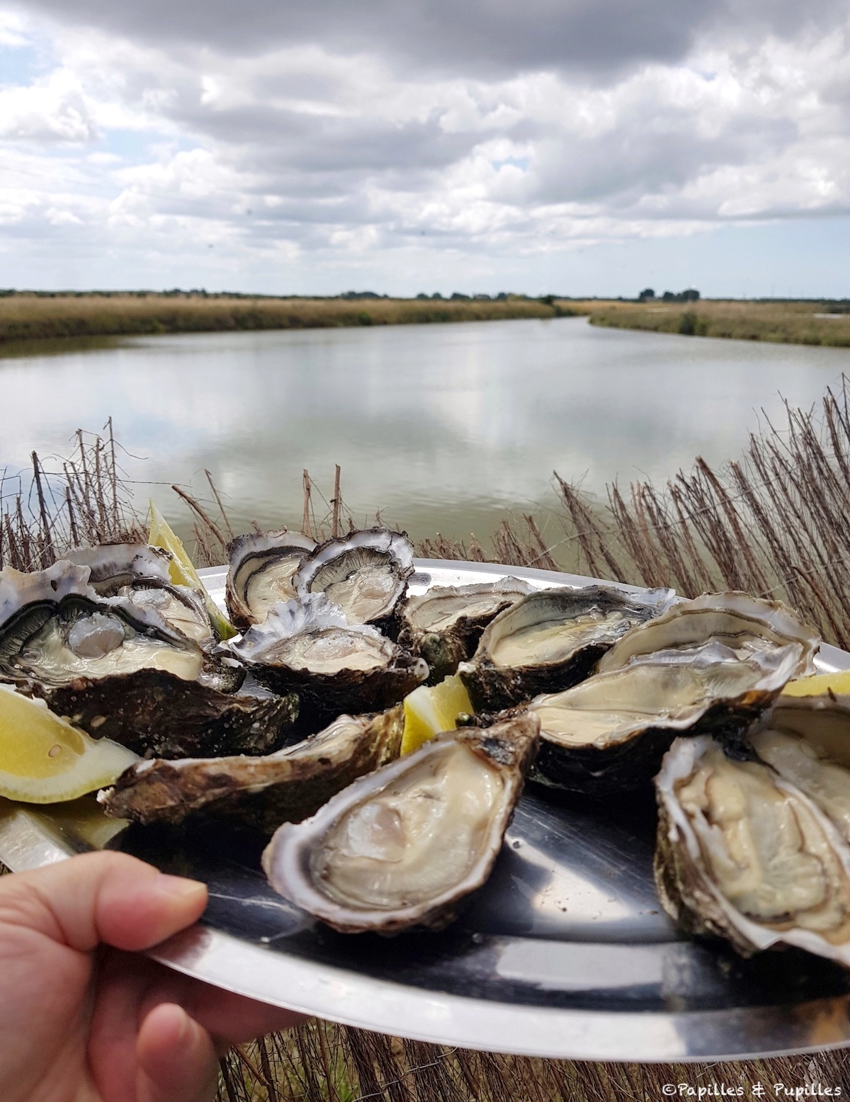 Huîtres claires du Médoc - La Petite Canau