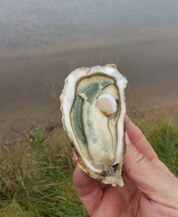 Huîtres super spéciales - claires du Médoc
