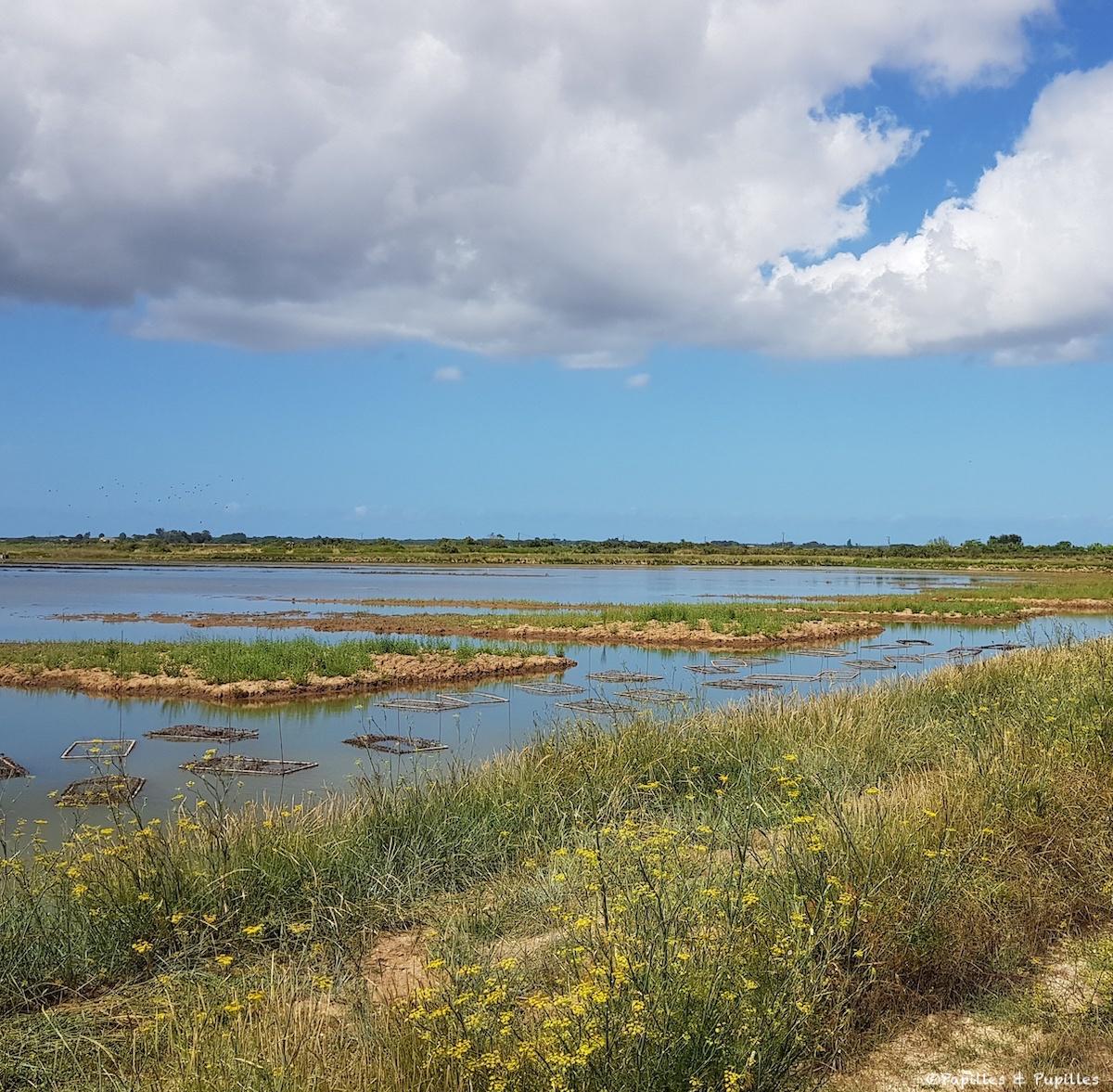 Les marais où sont élevées huîtres et gambas