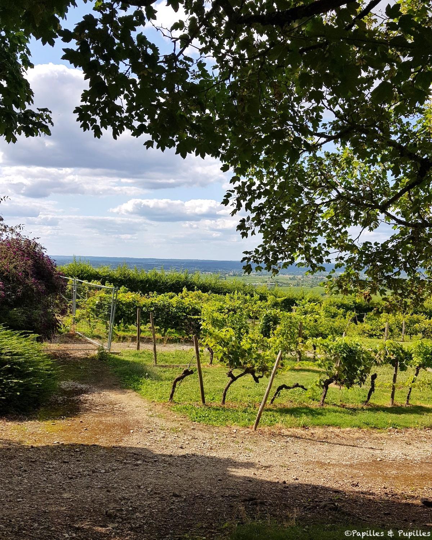 Les vignes du Château de Monbazillac