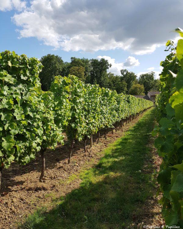 Vignes Château de Monbazillac