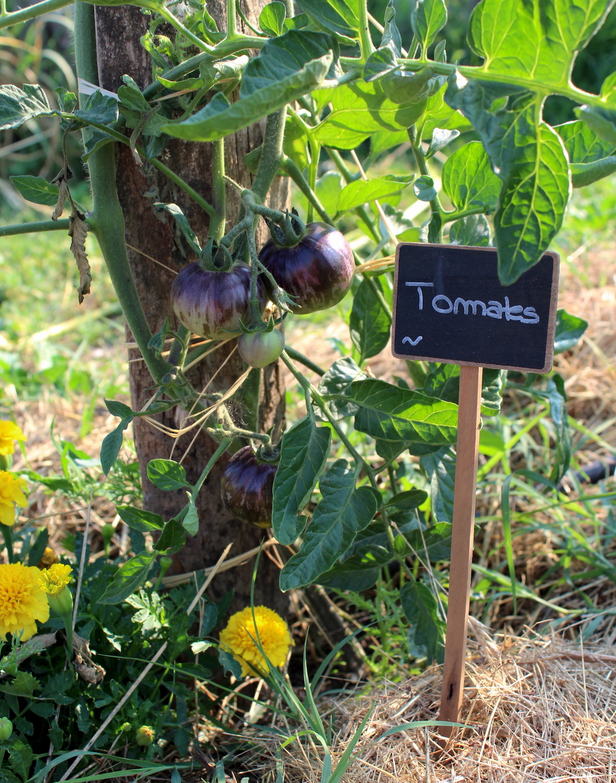 Oeillets et tomates