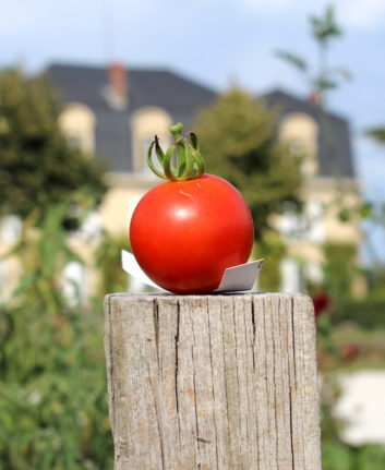Tomates ©Château Guiraud