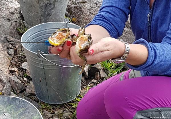 Couper le crabe en 2 - 2:2