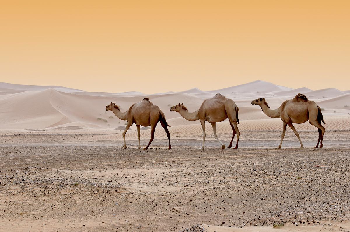 Désert Dubaï © HainaultPhoto shutterstock