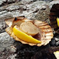 Saint Jacques cuite et citron