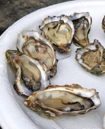 Huîtres Arcachon Cap Ferret