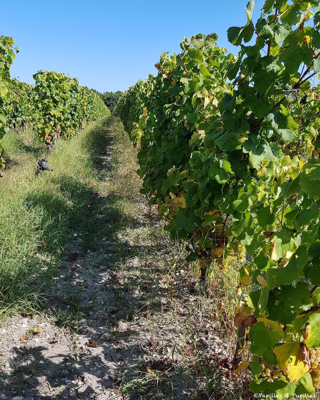 Vignes, Château Guiraud