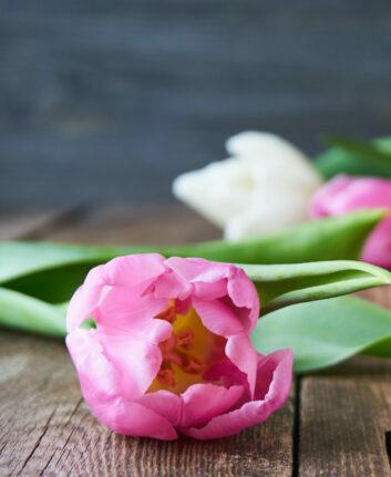 Tulipes ©Iuliia Kochenkova shutterstock