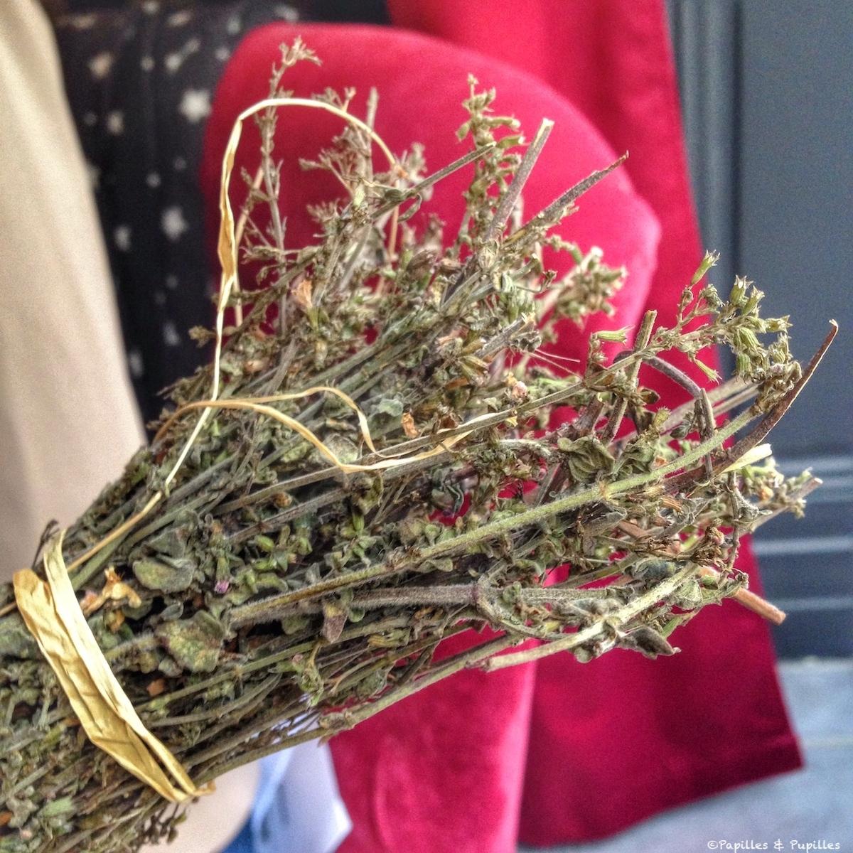 Nepita séchée, herbe aromatique corse