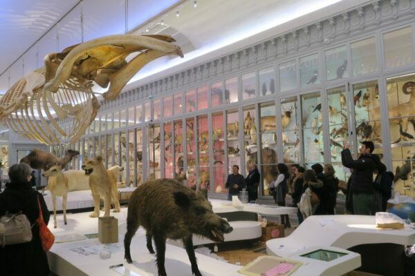 Muséum d'Histoire Naturelle ©Loïc Graniczny