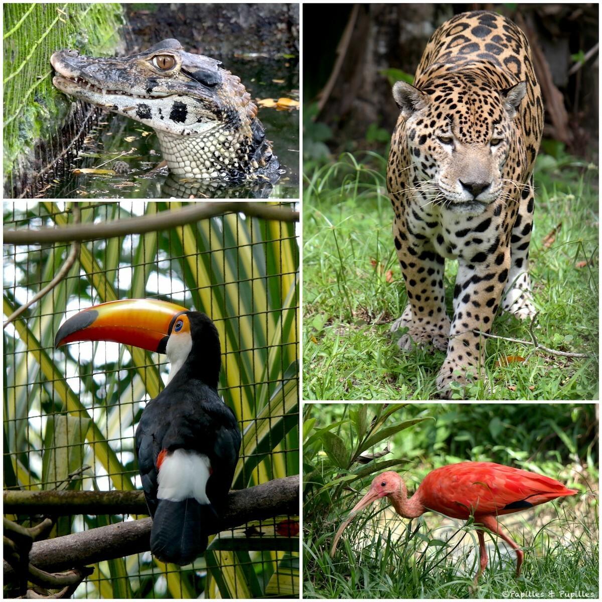 La faune de Guyane