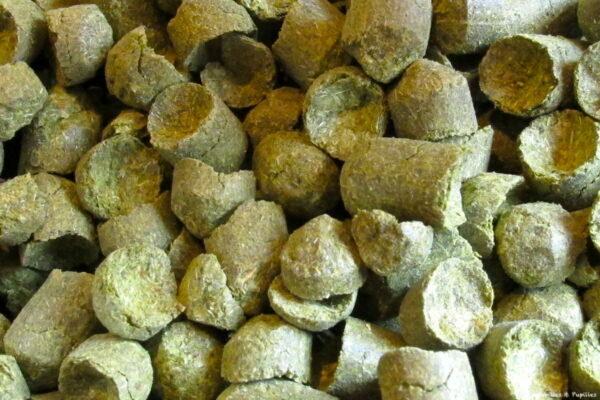Pellets de houblon