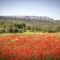 Sainte Victoire ©My Provence