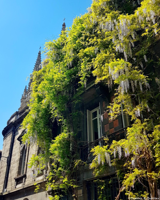 Glycine rue Notre-Dame, Bordeaux