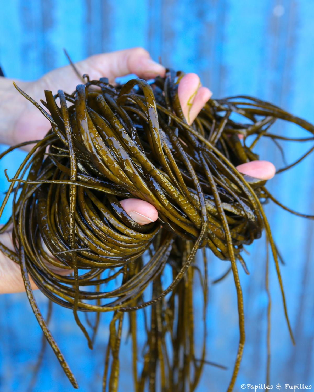 Spaghetti (ou haricots) de mer
