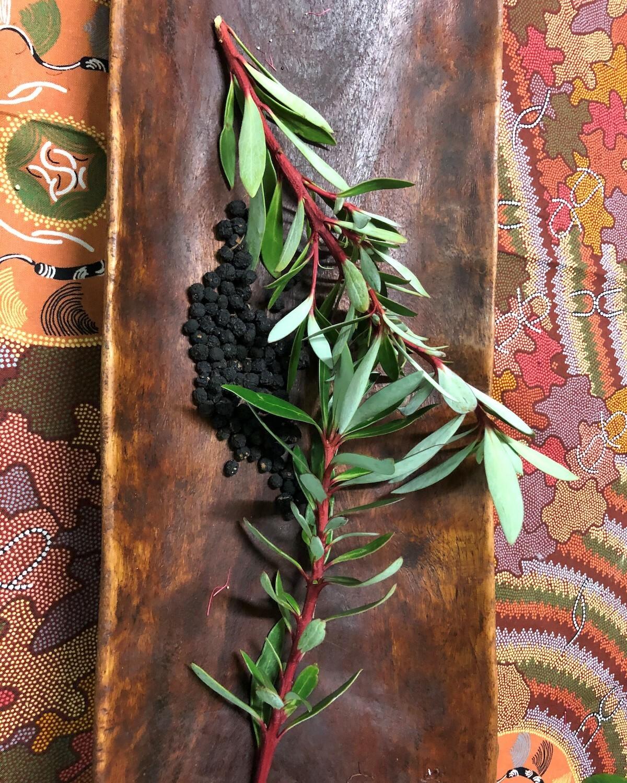 Poivre natif australien (baies et feuilles)