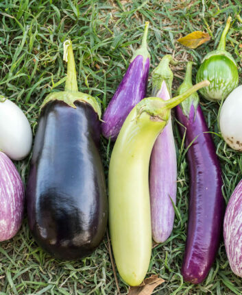 Aubergines ©washington State Department of Agriculture licence CC BY-NC 2.0