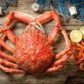 Araignée de mer © JIL Photo shutterstock